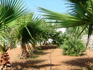 Jardín Alquiler Casa 45348 Pescoluse