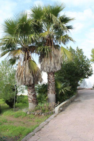 Alquiler Villa 108209 Gallipoli