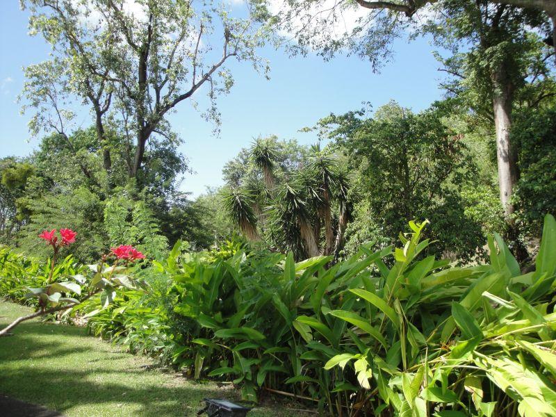 Jardín Alquiler Estudio 116462 Le Diamant