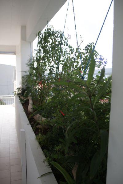 Vistas desde la terraza Alquiler Apartamento 67787 Sainte Anne (Martinique)
