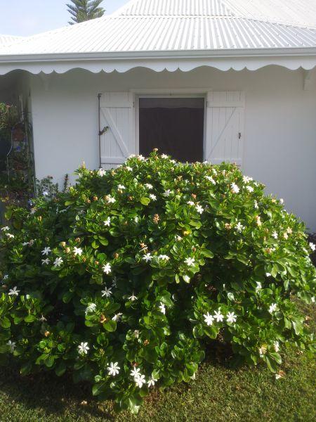 Vistas exteriores del alojamiento Alquiler Casa rural 16331 Saint Francois