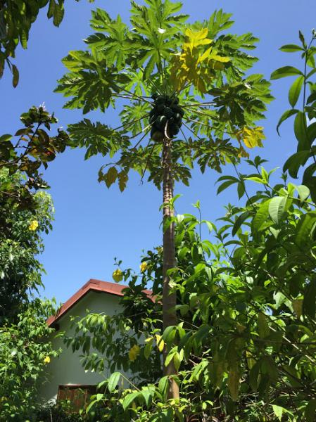 Vistas de las proximidades Alquiler Bungalow 8003 Gosier (Guadalupe)