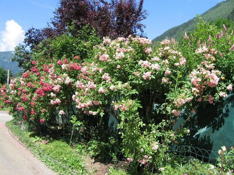 Alquiler Apartamento 93214 Chamonix Mont-Blanc
