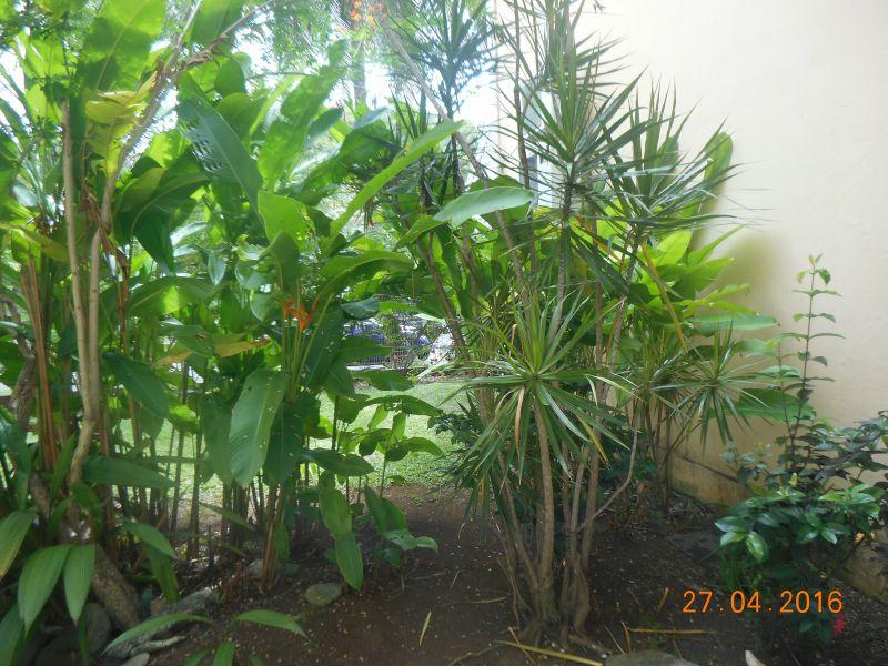 Jardín Alquiler Apartamento 86341 Gosier (Guadalupe)