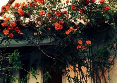 Alquiler Casa rural 97630 Afife