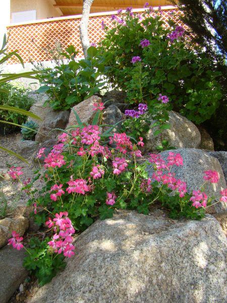 Jardín Alquiler Villa 79457 Propriano